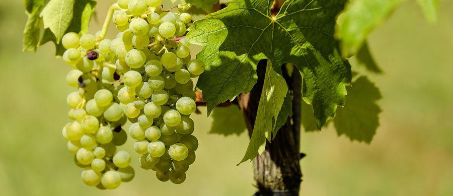 La Mancha huele a vino