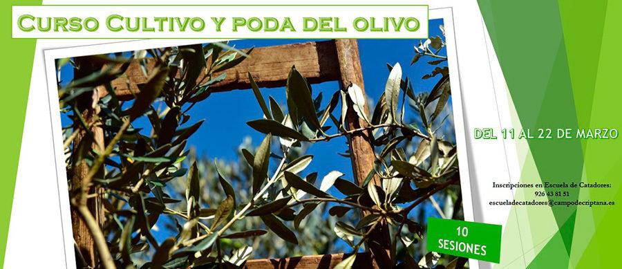 Curso de cultivo y poda del olivo