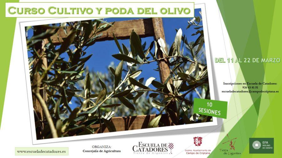 Curso del Cultivo y la Poda del olivo